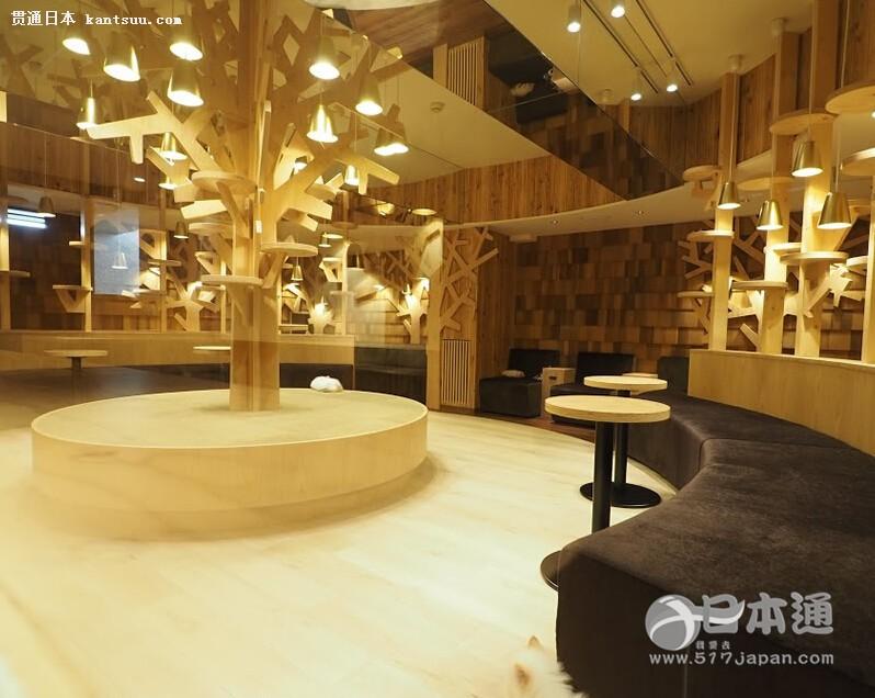 涩谷超时尚猫咖啡店mocha!奢华空间超乎想象