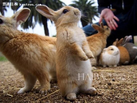 疯狂动物城中的兔子最萌的图片