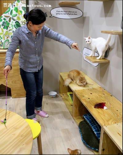 """日本大阪现""""猫楼"""" 5层建筑全为猫设计"""