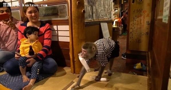 日本酒馆生意经:可爱的猴子当服务员,香蕉变工资